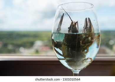 The live crawdad in the wine glass