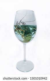 The live crawdad in the wine glass on the white background