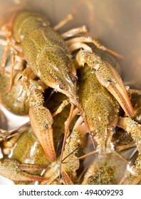 Live crayfish in the water as a background
