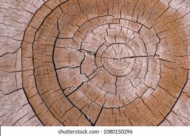 live edge wood slabs. Old wood texture.