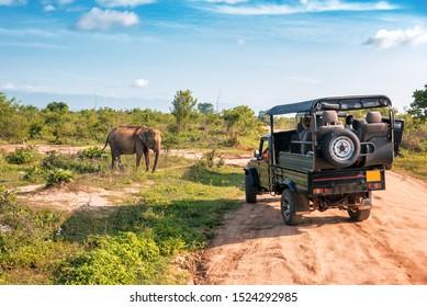 Live elephant on safari tour. Udawalawe Sri Lanka