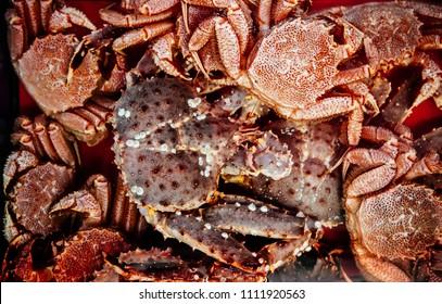 Live Japanese king crabs (Taraba) and zuwai crab at fish market in Hakkodate, Hokkaido.