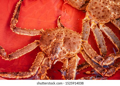 Live Japanese king crabs or Taraba at Hakodate Asaichi fish market Hokkaido. Top view live fresh seafood shot