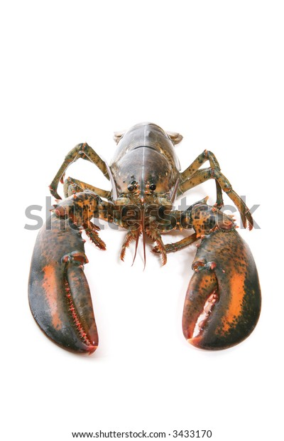 A live lobster over white  (Focus on Face)