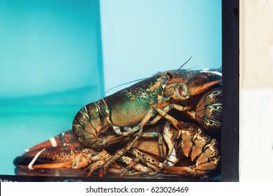 Live lobsters in aquarium at restaurant. - Shutterstock ID 623026469