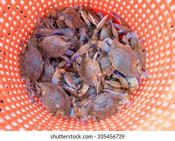 Live Maryland Crabs in an Orange Circular Basket