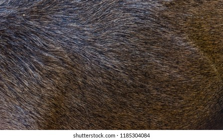 Live Moose Fur Background