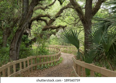 Live Oak Hammock Trail, Long Key Natural Area & Nature Center, Davie, Florida, United States