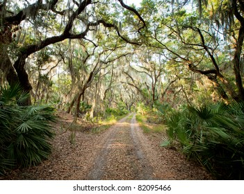 Live Oak Road - Little St. Simons Island, Georgia (USA)