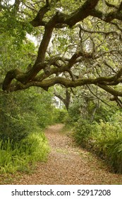 Live Oak Shading Garden Path