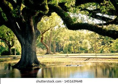 Live Oak Tree Images, Stock Photos & Vectors | Shutterstock