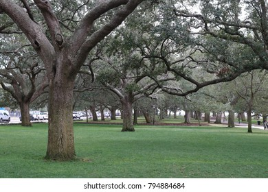Live Oaks Charleston
