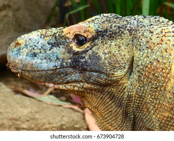 Live posing beautiful reptile against nature background.