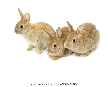 Live rabbits isolated on white background
