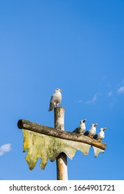 Live Sea Gull perched on top of pole beside sculpture of three humorous wooden carved seagulls and faux ship's mast, with blue sky