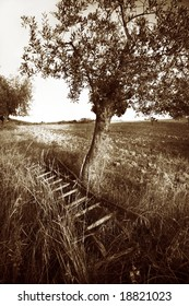 live tree with picking ladder in sepia