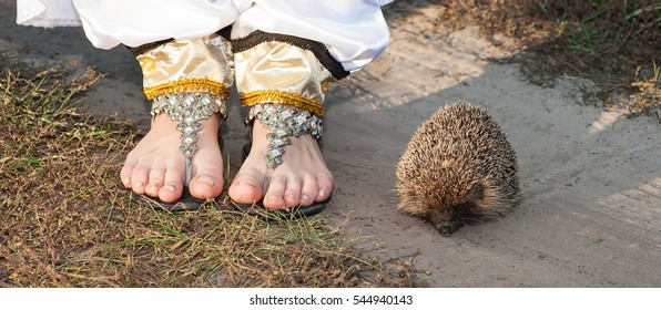 06ea4388a01a Live wild hedgehog and the girl s legs in sandals