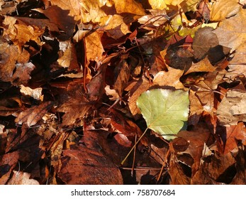 Lively closeup of falling autumn leaves with vibrant backlight from the sun