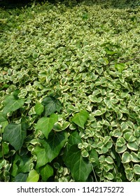 Lively green plants