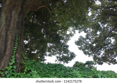 Lively green plants and tree