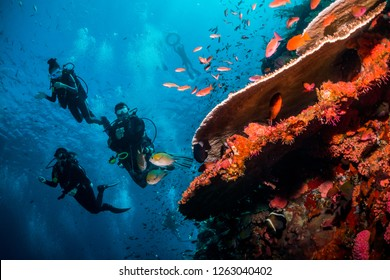Lively underwater scene with a group of scuba divers swimming around a healthy wall of coral with bright colours and vibrant fish life