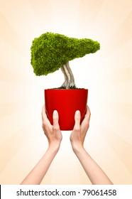 Liver bonsai tree