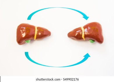 Liver transplantation concept. Two 3D model of human liver are opposite one another with arrows from one to another. Photo or illustration showing liver transplantation process from donor to recipient