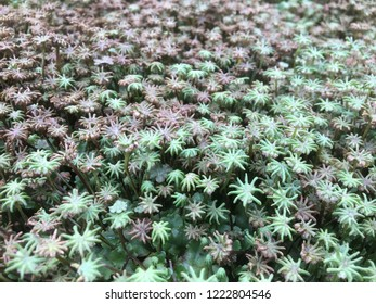 liverwort, it is kind of a moss