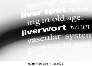 liverwort word in a dictionary. liverwort concept.