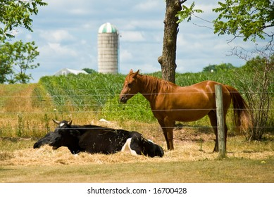 livestock and crops on the farm