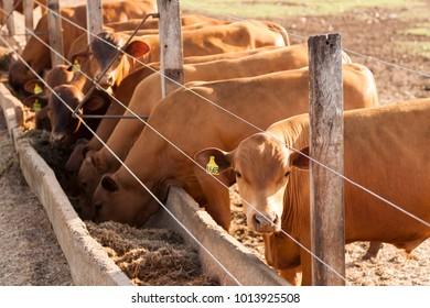 A livestock feed