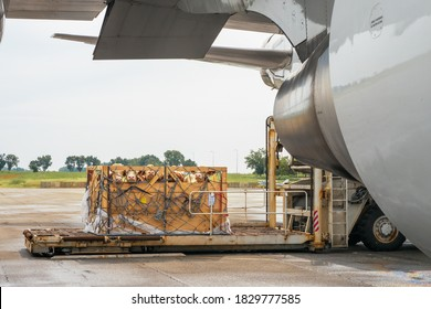 Livestock in wooden boxes secured by nettings being offloaded by a high-loader from the lower cargo hold of a Jumbo Jet - Shutterstock ID 1829777585
