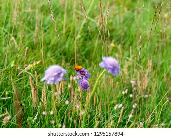 Livigno, Italy - July 21, 2017: Wild flowers in summer