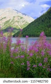 Livigno lake panorama