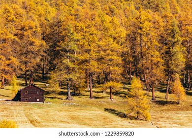 Livigno - Valtellina (IT) - Ancient wooden log cabin in an autumn setting