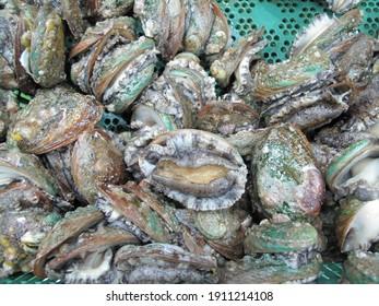 Living Abalone, Abalone, Abalone shell