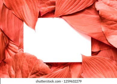Living Coral background made of leaves and blank white greeting card. Pantone color of the year 2019. Nature concept. Flat lay. mock up. holiday invitation