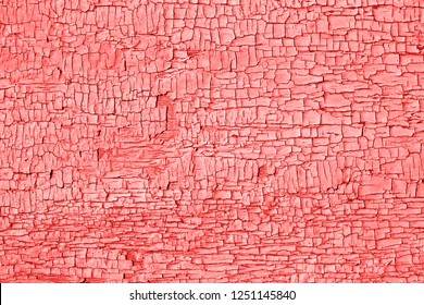 Living Coral color of the Year 2019 Old cracked paint on wooden table. Weathered Texture, rustic background.