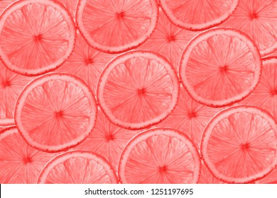 Living Coral color of the Year 2019 on pattern of grapefruit slices, citrus abstract background. Trendy color.