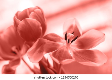 Living Coral Color of the year 2019. Photo of beautiful flowers. Main trend concept.