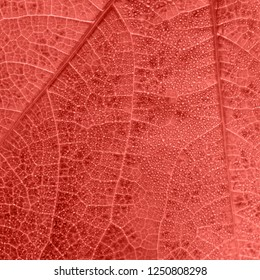 Living Coral leaf texture with small drops and tiny veins