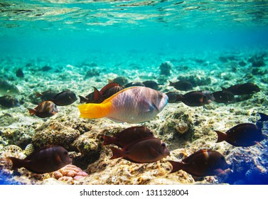 Living Coral reef in Red Sea, Egypt. Natural unusual background.