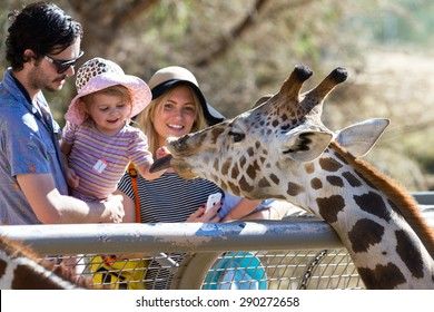 The Living Desert Zoo, Palm Desert, California - February 05 : Tourist family hand feeding a Giraffe at the zoo, February 05 2015 in The Living Zoo, Palm Desert, California.