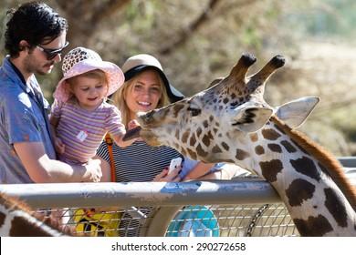 The Living Desert Zoo, Palm Desert, California - February 05 : Tourist family hand feeding a Giraffe at the zoo, February 05 2015 in The Living Zoo, Palm Desert, California.
