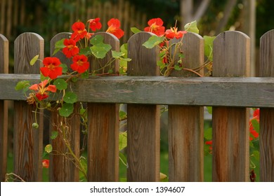 living on a fence