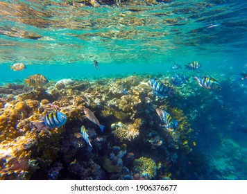 living reef with incredibly beautiful corals and fish in the Red Sea in Sharm El Sheikh