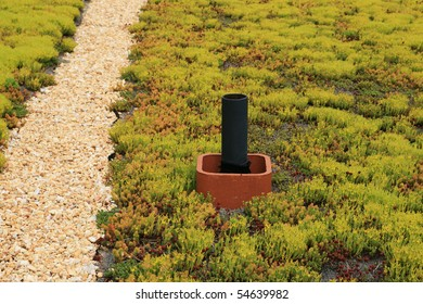 living roof top covered with sedum plants with gravel path