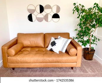 Living room with brown leather mid century modern couch and ficus benjamina house plant