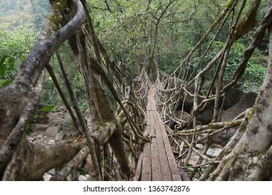 Living Root Bridge of Cherrapunji, Meghalaya, India