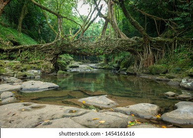 Living Root bridge near Cherrapunjee,Meghalaya,India